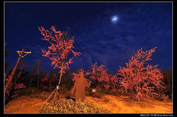 換上黑夜的櫻花台, 月亮正看著我們