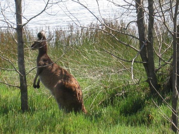 kangaroo: 咦..有人來了..快溜