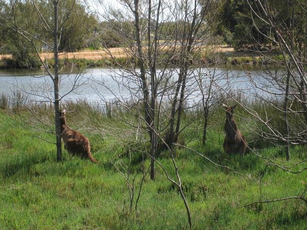 牠們在河邊休息....但一堆人來打擾他們午休..真是拍謝
