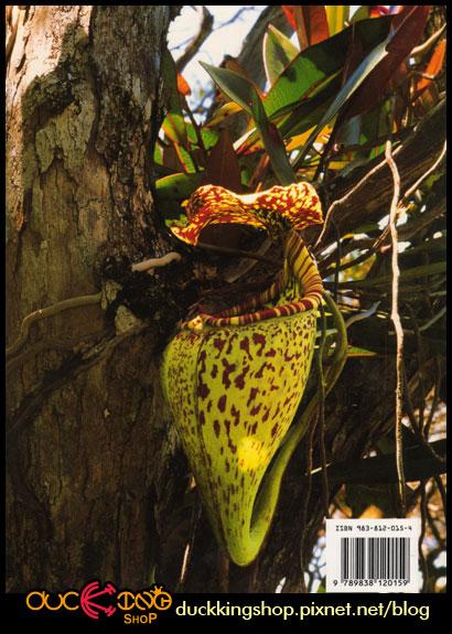 Nepenthes-of-Borneo封底