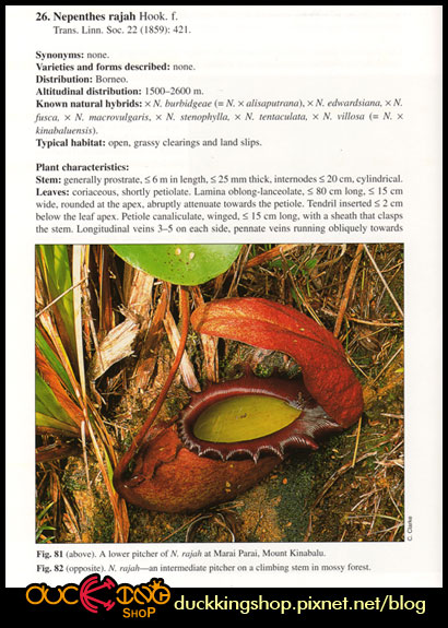 Nepenthes-of-Borneo內頁1