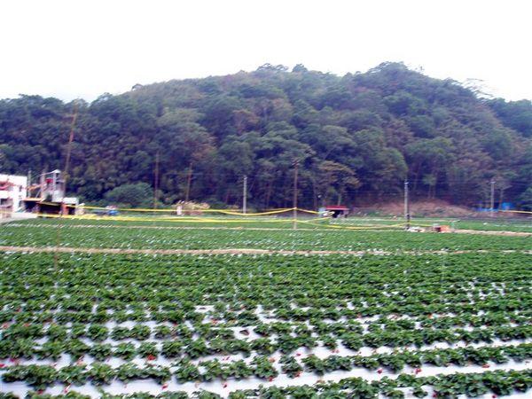 121810台3大湖草莓園.JPG