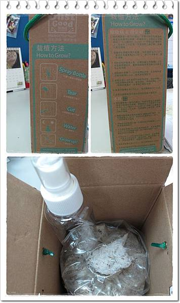 菇菇盒外+open2-b