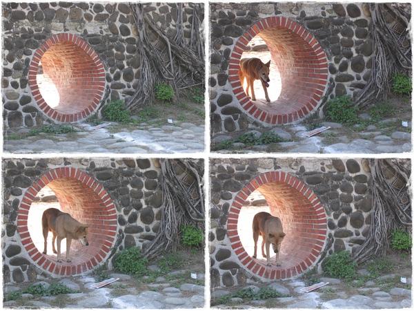 IMG_076-79_20110207_古阿基從學校穿洞回來.jpg