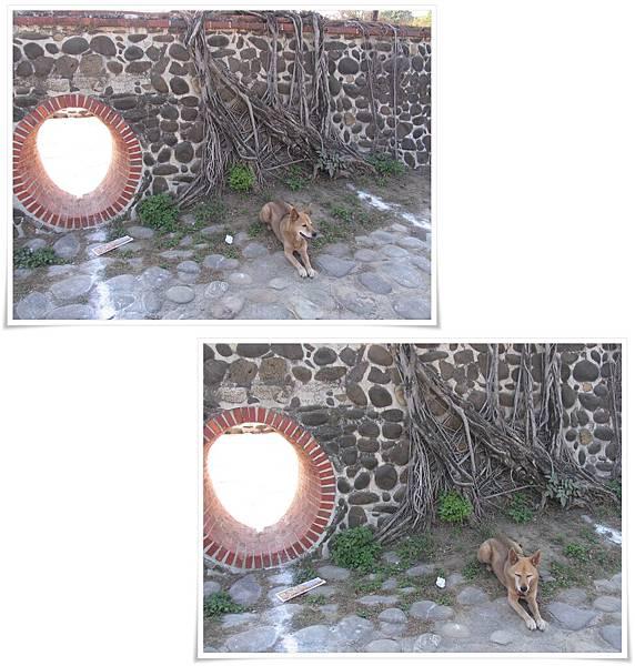 IMG_082-83_20110207_古阿基和ㄧ圈.jpg