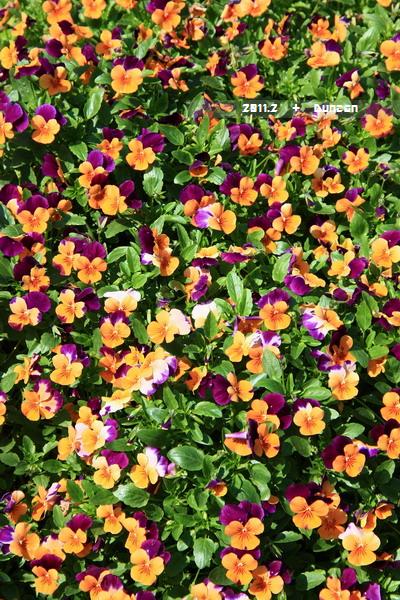 花博花卉-6.jpg