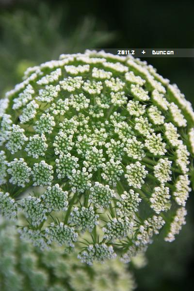 花博花卉-23.jpg