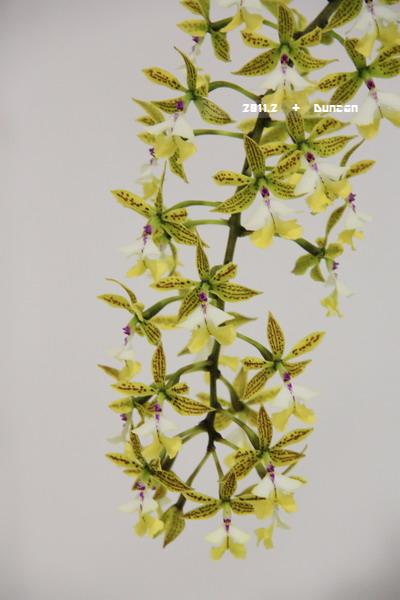 花博花卉-31.jpg