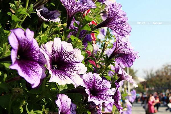 花博花卉-18.jpg