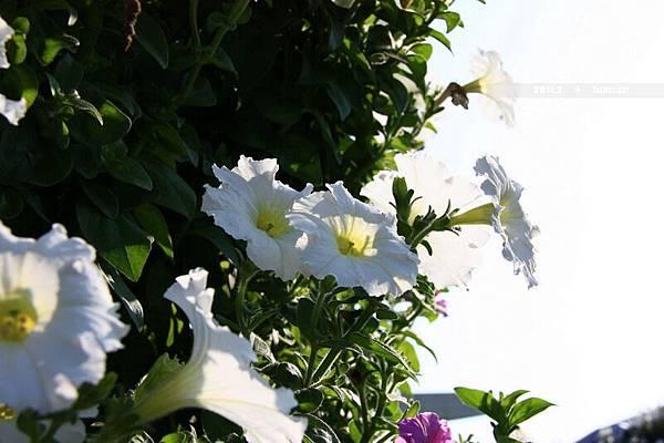 花博花卉-15.jpg