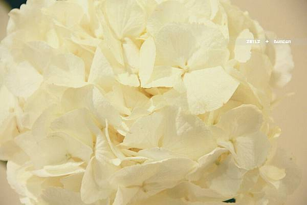 花博花卉-26.jpg