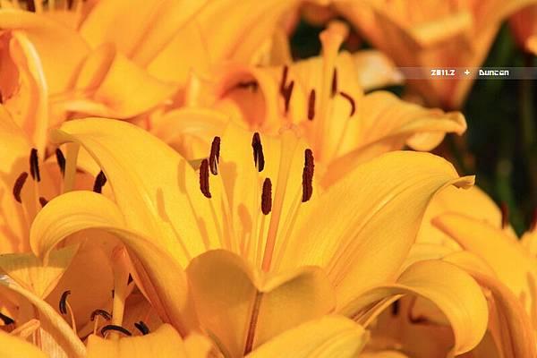 花博花卉-20.jpg