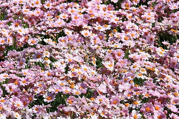 花博花卉-10.jpg