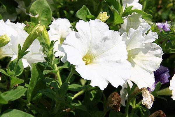花博花卉-13.jpg