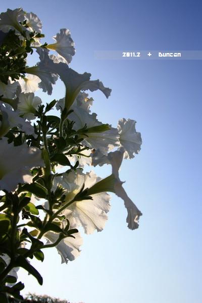 花博花卉-17.jpg