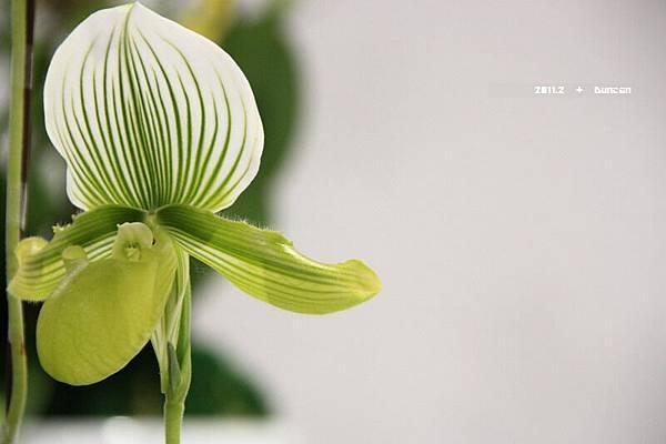 花博花卉-28.jpg