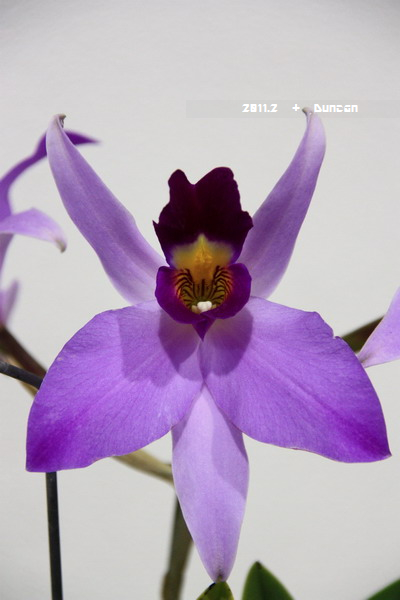 花博花卉-30.jpg