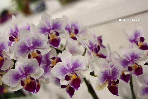 花博花卉-27.jpg