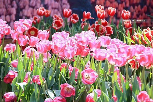 花博花卉-2.jpg