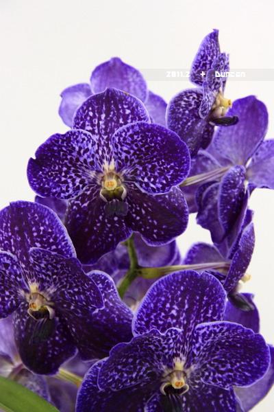花博花卉-32.jpg