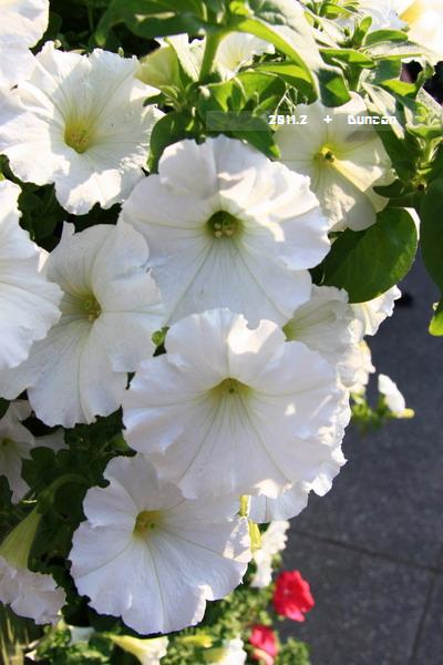 花博花卉-16.jpg