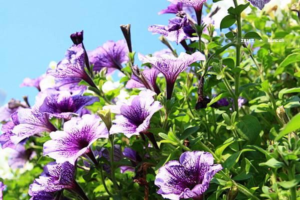 花博花卉-14.jpg