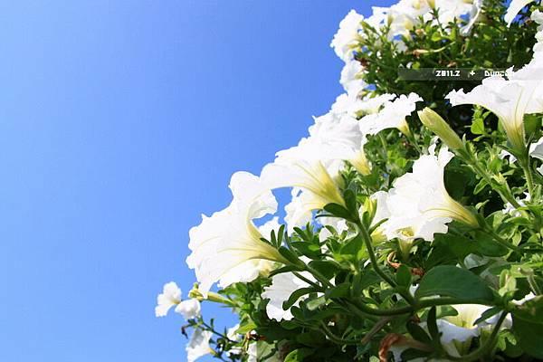 花博花卉-12.jpg