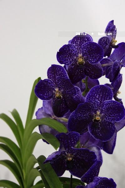 花博花卉-33.jpg