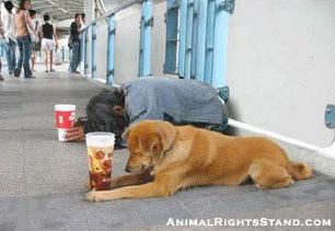 beg dog