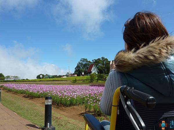 P1060666坐在輪椅上,看著藍天,賞著花海,吹著涼涼的風,真的是太舒服了^____________^.JPG