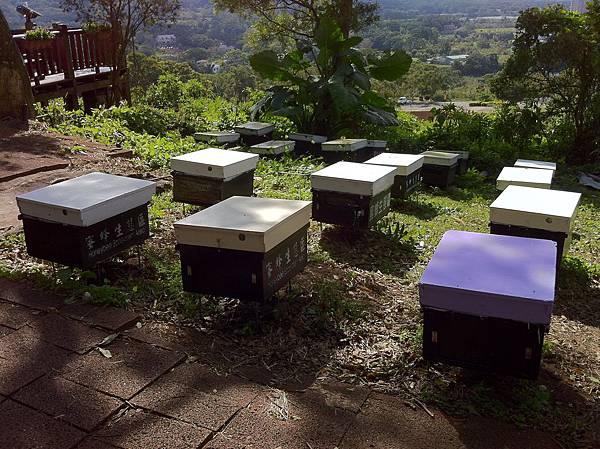 IMG_0296花海飲食區的蜜蜂展示區.JPG