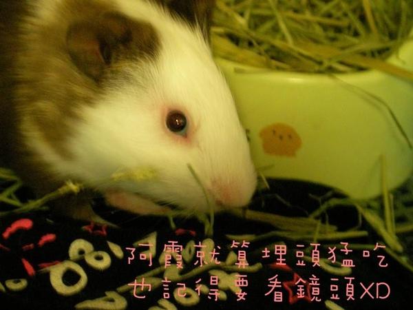 09/04/27 P家牧草草況