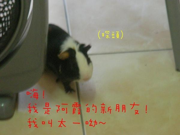 SANY0131.jpg