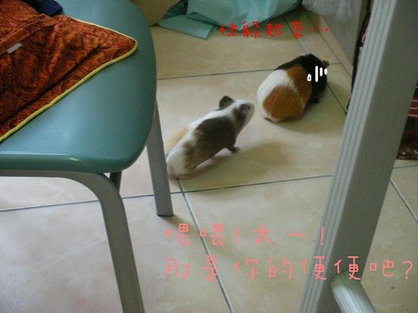 SANY0133.jpg