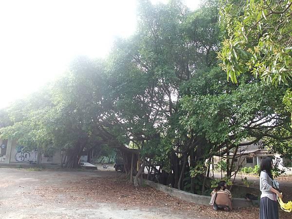 陽光與大樹