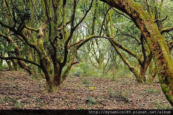 有人說是荔枝,但身為海賊迷的我,怎麼看就是顛狂綠樹,這裡一定不會有猛獸,可以放心爬山