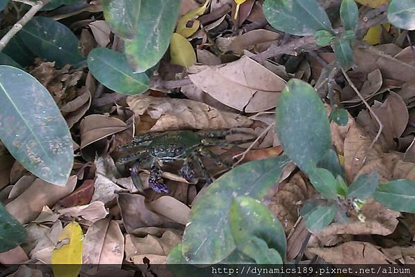 IMAG0500,跑掉的螃蟹.jpg