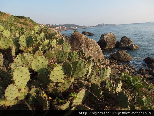 柴山海灘秘境,仙人掌.jpg