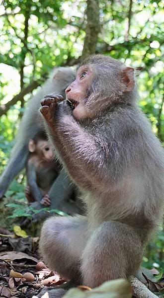 11027509_小猴吃東西+.jpg
