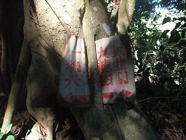 DSCF5870_九龍樹的告示牌.JPG