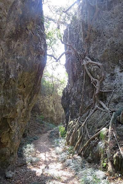 10988296_路上有許多類似的珊瑚礁岩的小峽谷.jpg