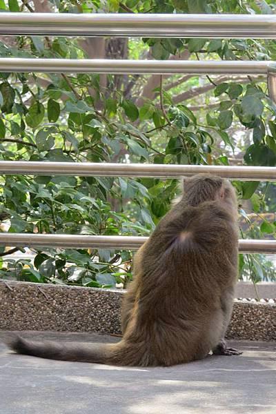 10246608_文院的猴子+.jpg