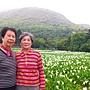 陽明山海芋季