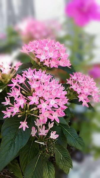 美麗的花.jpg