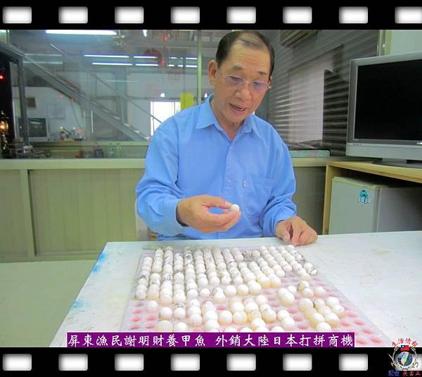 20140412-甲魚外銷-屏東市漁民謝明財拼商機2