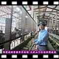 20140414-陳懋成經營囍羊羊牧場-大武山下打造休閒庭園2