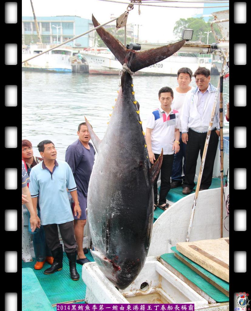 20140417-2014黑鮪魚季第一鮪由東港籍王丁春船長稱霸2