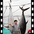 20140417-2014黑鮪魚季第一鮪由東港籍王丁春船長稱霸1