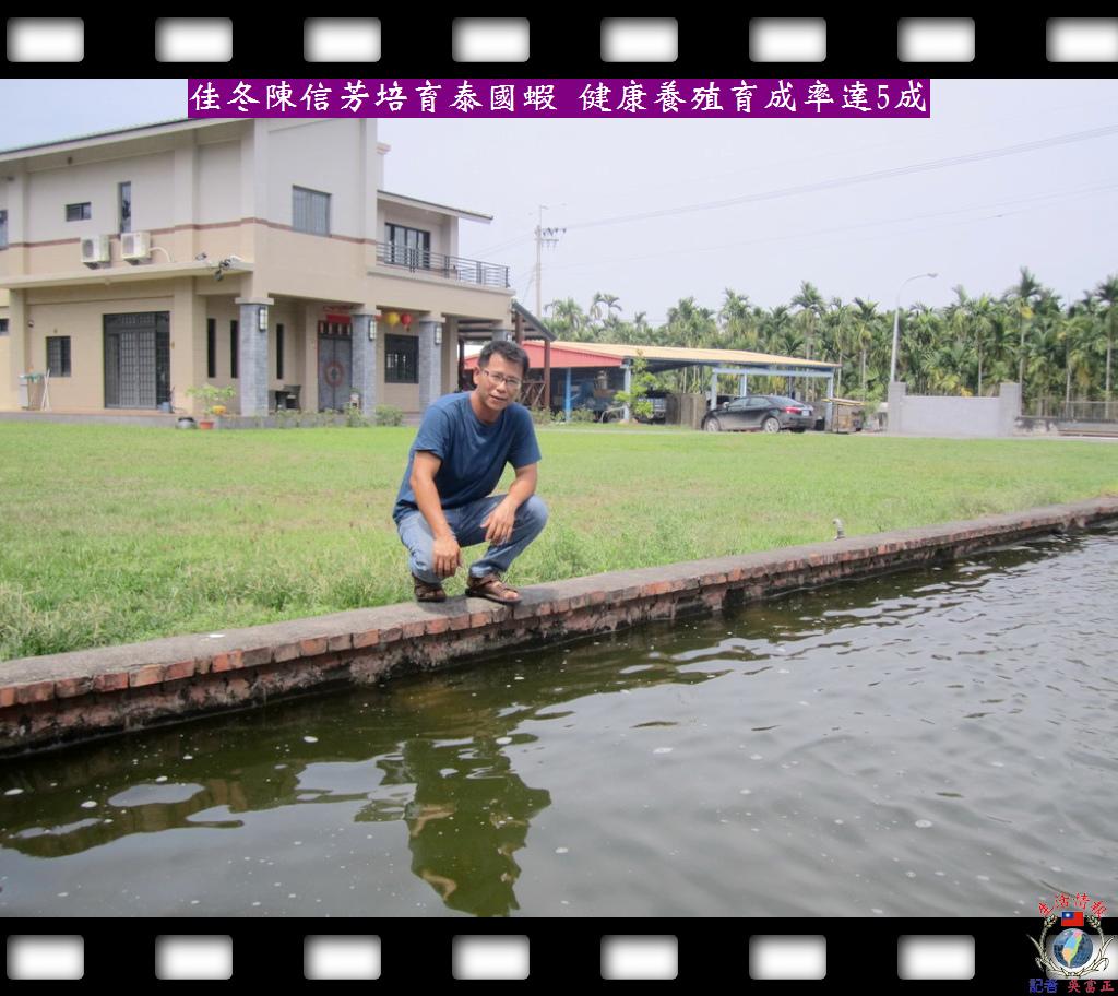 20140417-泰國蝦健康養殖育成率可達5成3