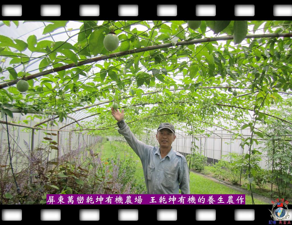 20140429-乾坤有機農場充滿新鮮且有機的養生農作2
